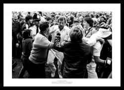 Ian Botham Print -  Headingley 1981 Ashes Cricket Photo Memorabilia