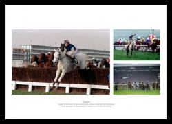 Desert Orchid Horse Racing Legend Photo Memorabilia